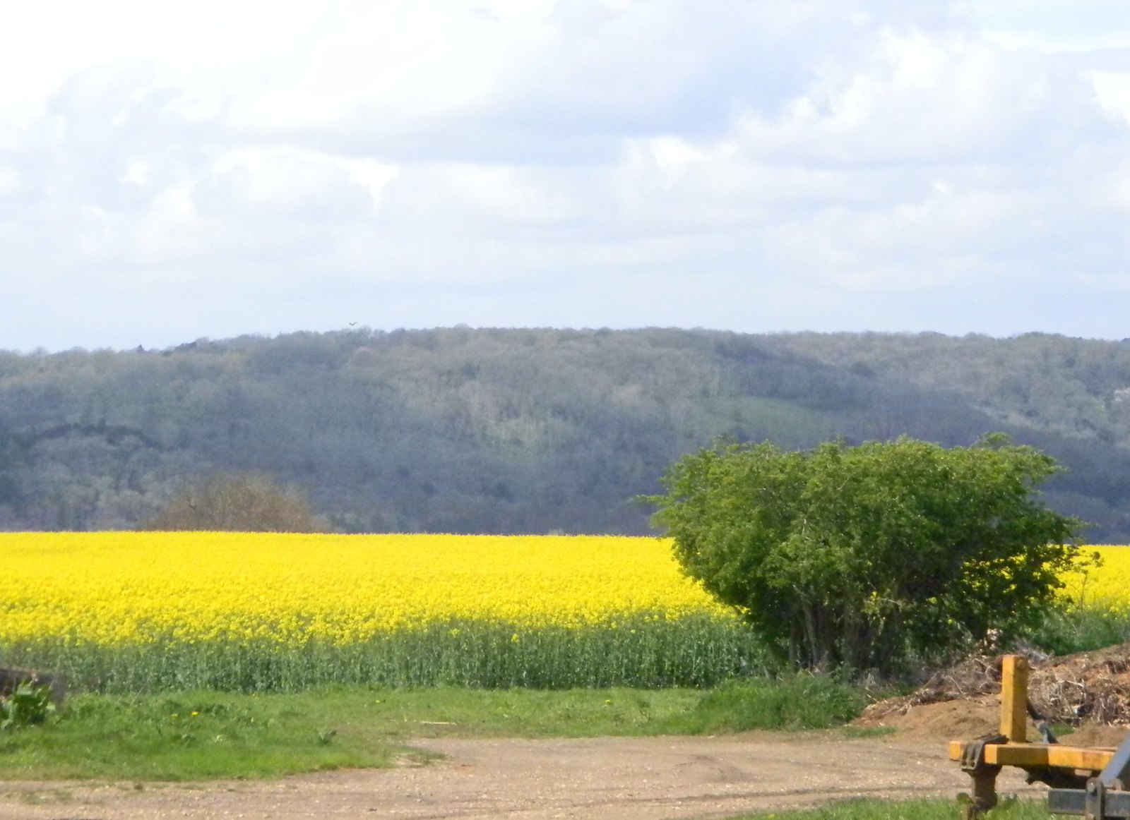 Rapefield Seen from Upper Gatehampton Farm Pangbourne Circular