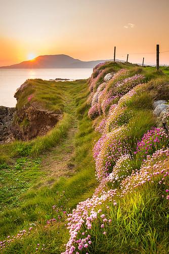 ocean flowers ireland sunset sea path walk atlantic mayo atlanticocean pathway louisburgh sunsetireland roonagh irelandtourism irelandseascape wildatlanticway