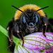 Bee, head-on by Garian Photography