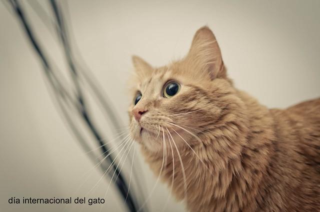 142/366: día internacional del gato