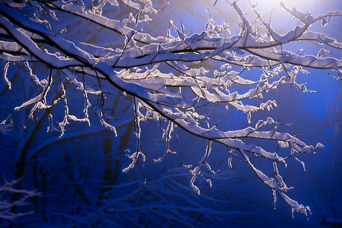 blue winter snow tree
