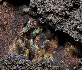 Termites | by James Niland
