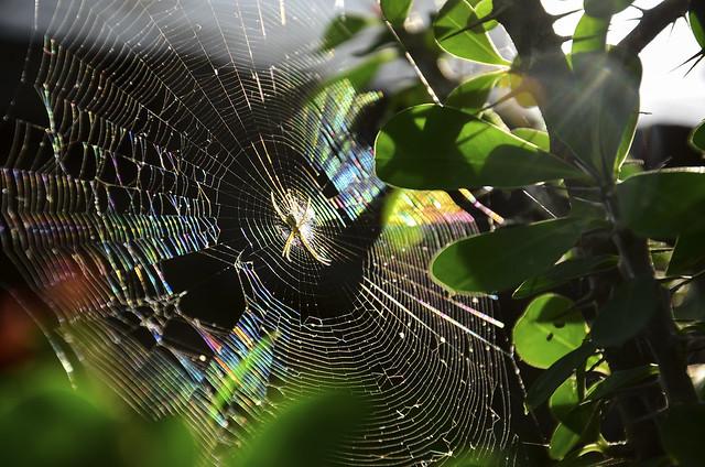 Teia de Sonhos / Web of Dreams