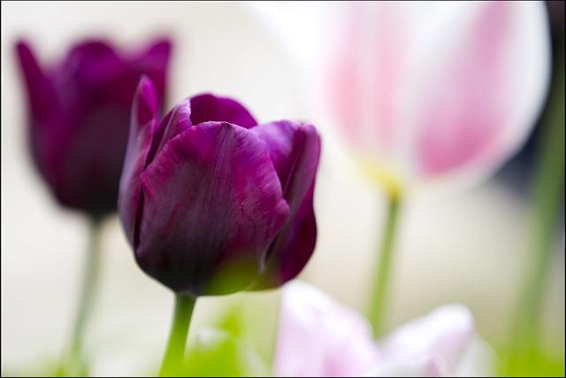 Messer Tulipano - EXPLORE 28/04/2013