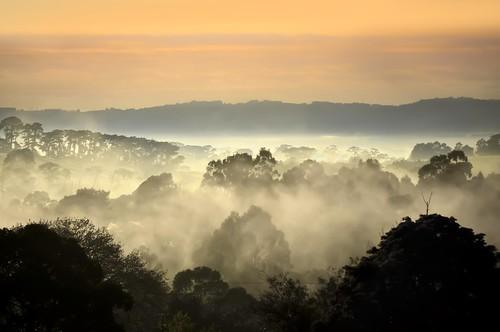 morning mist weather misty fog sunrise landscape nikon foggy australia victoria vic layers gippsland warragul strzeleckiranges westgippsland d5100 strzeleckis nikond5100 phunnyfotos