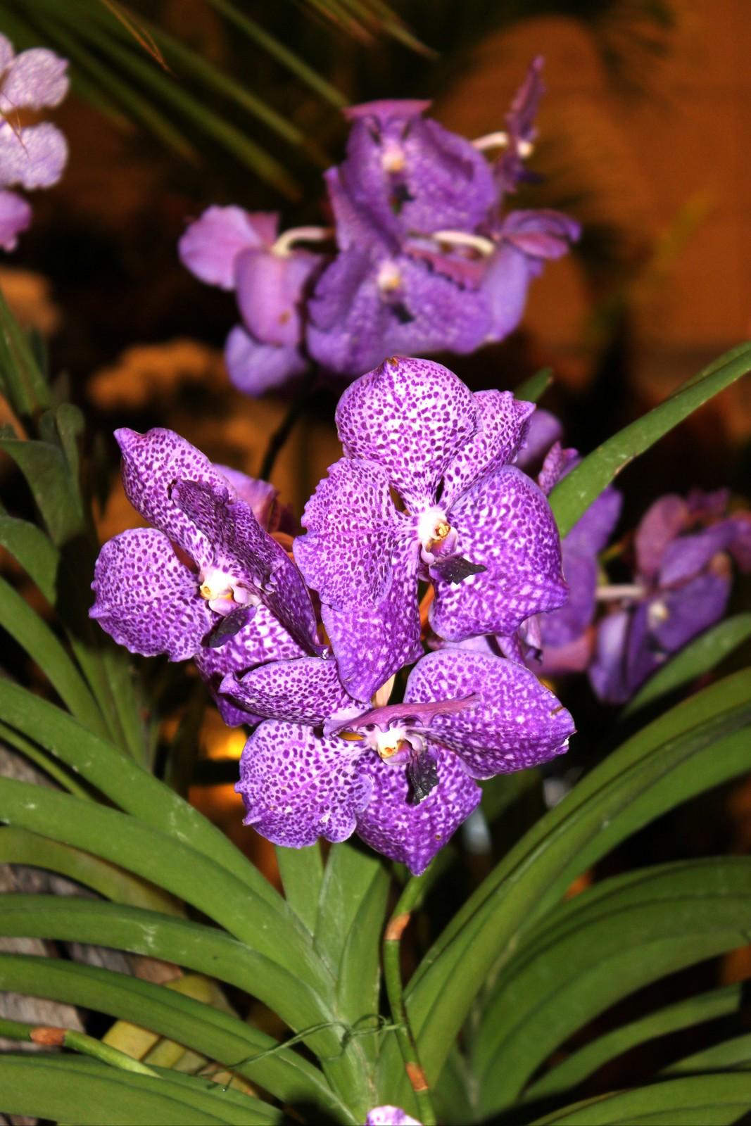 Orchideengarten im Changi Airport Singapur (7)