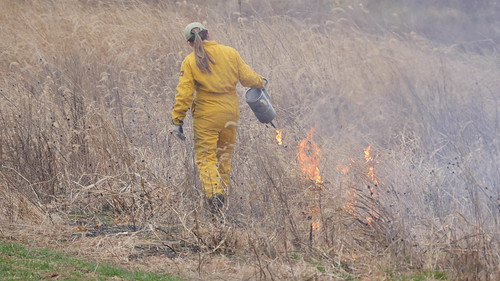 Photo of staff conducting a prescribed burn of dead underbrush