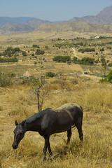 busot horse