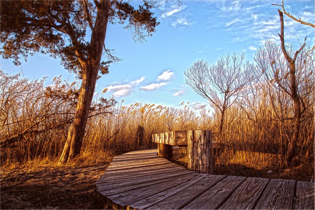 Cattus Island, Ocean County Park, New Jersey