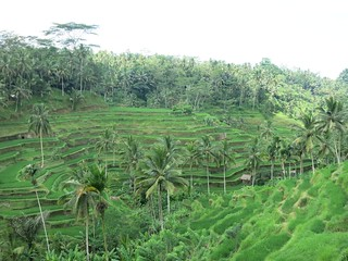 Rice Terraces in  Bali | by fabola
