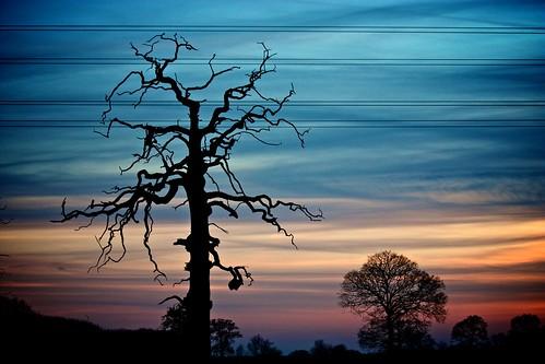 sunset tree silhouette dead tramonto albero abigfave
