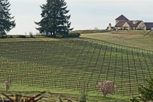 King Estate Winery | by drburtoni