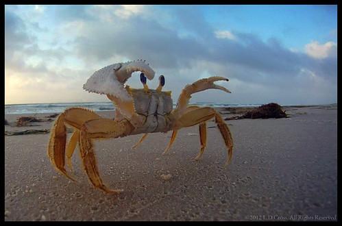 ocean beach water clouds sunrise sand surf florida attack crab capture stillframe saintgeorgeisland ghostcrab gopro