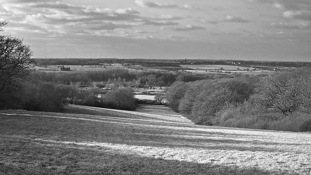 Long Field (January)