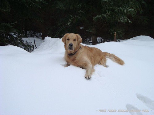 2011_12_29 - Vítkovice a sníh