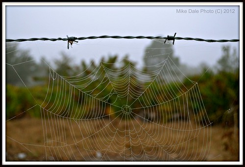 mike dale florida photos spiderweb barbwire lakewoodranch