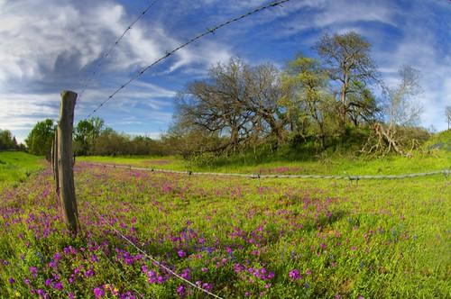 trees fence texas wildflowers wallis barbedwirefence countryroad deadtrees austincounty wallistexas austincountytexas