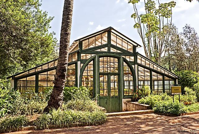 Greenhouse # 6