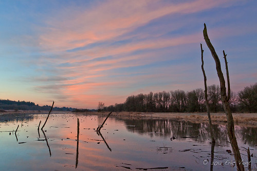 pink winter color reflection sunrise landscape washington ridgefield ridgefieldnationalwildliferefuge ridgefieldnwr
