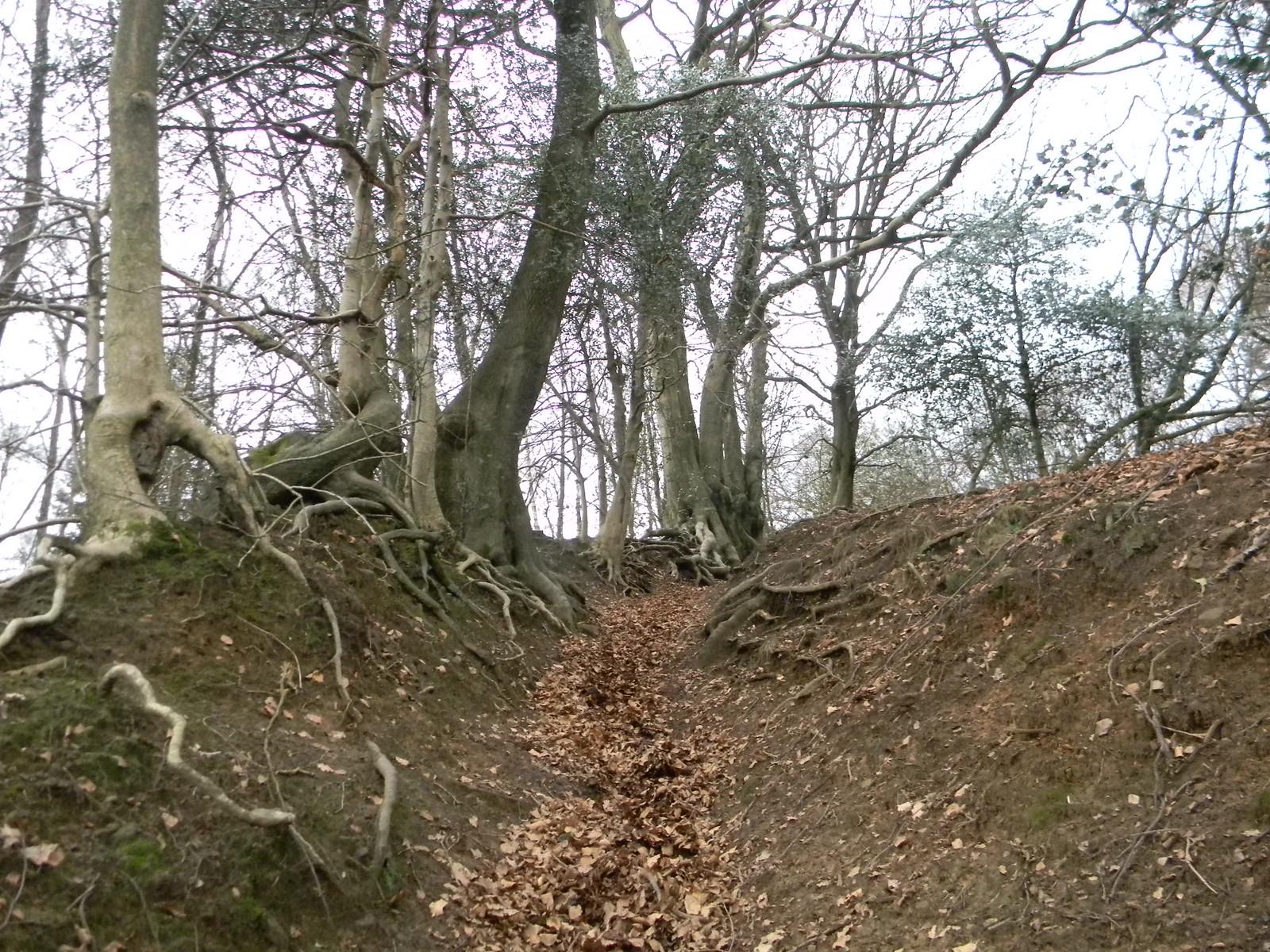 Steep climb Holmwood to Gomshall