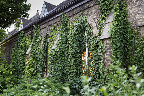 Ivy Church | by ZensLens