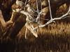 Bernier's Teal - Anas bernieri by Andy Bunting Photography