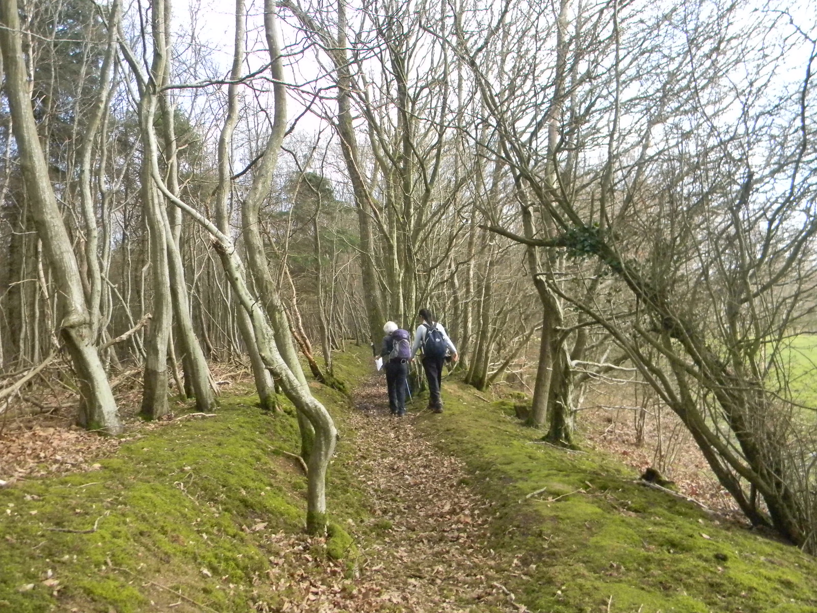 Through trees Robertsbridge to Battle