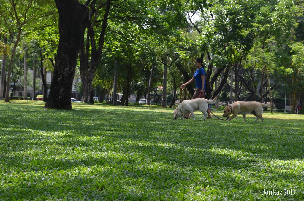 Saturday Morning at Ayala Triangle Gardens