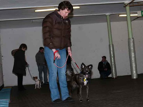 January Evening Puppy Class | by Chadkirk Dog Training Club