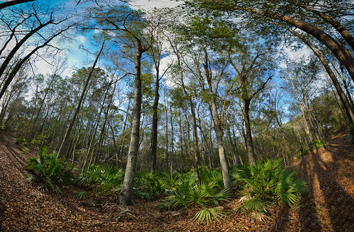 panorama usa pinetree landscape geotagged unitedstates florida gainesville windsor canopy 31 spherical wetland soundwalk alachua soundscape plumcreek josegarrido sawpalmetto environmentalsoundscapes geo:lat=2965347702 geo:lon=8216020346