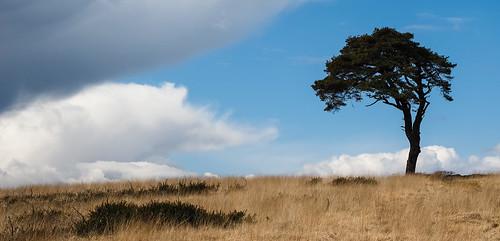 sky tree grass skyline clouds landscape bluesky somerset lonely prairie priddy