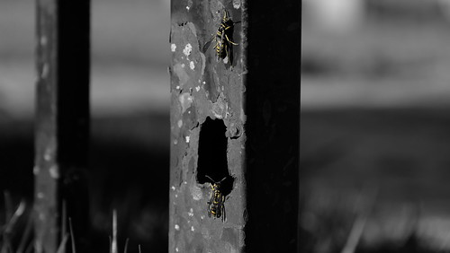 As vespas