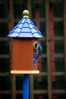 130312_ Our new bird house has a visitor no1 | by Headphonaught
