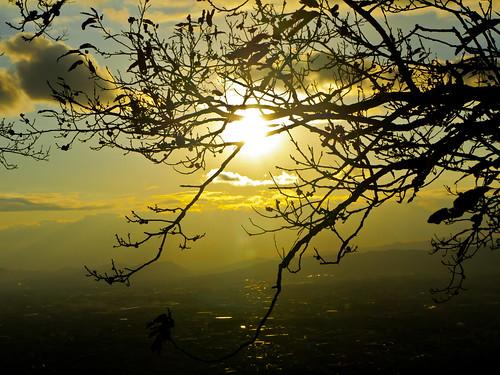 park sunset sky tree nature japan lumix landscapes nara gf2