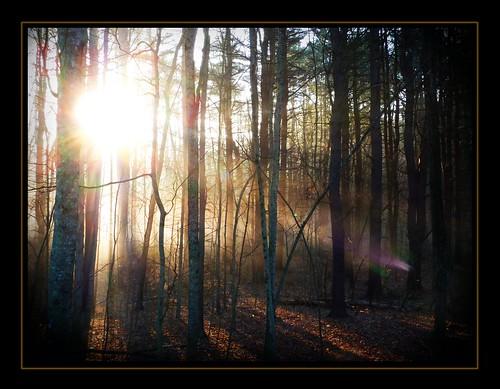 trees light sun mist sunrise connecticut gimp ct rays ballouville