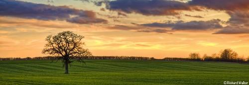 trees sunset sky field clouds landscape tonemapped