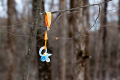 Bozen Kill Falls - Duanesburg, NY - 2012, Jan - 11.jpg by sebastien.barre