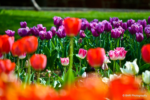 Floral Library @ the Netherland Carillion | Field of ...