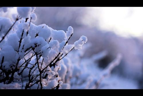 winter sun snow ice sunrise iowa canon50mmf18 desmoines