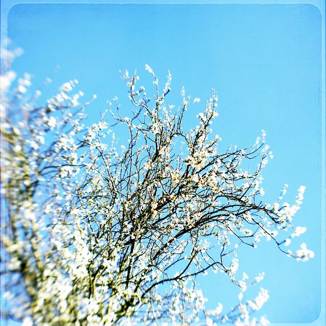Happy Spring Everyone!