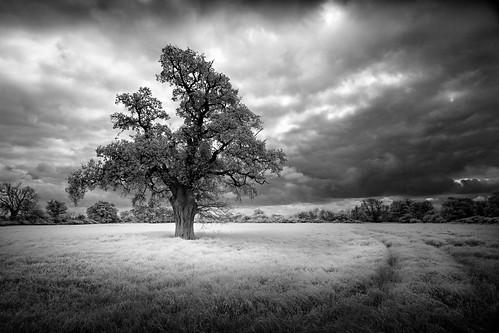 sky blackandwhite storm nature monochrome field clouds dark landscape ir mono oak moody norfolk meadow ethereal infrared brooding lonetree ze carlzeiss wortham suffok canon5dmkii distagont3518 wigwamhill