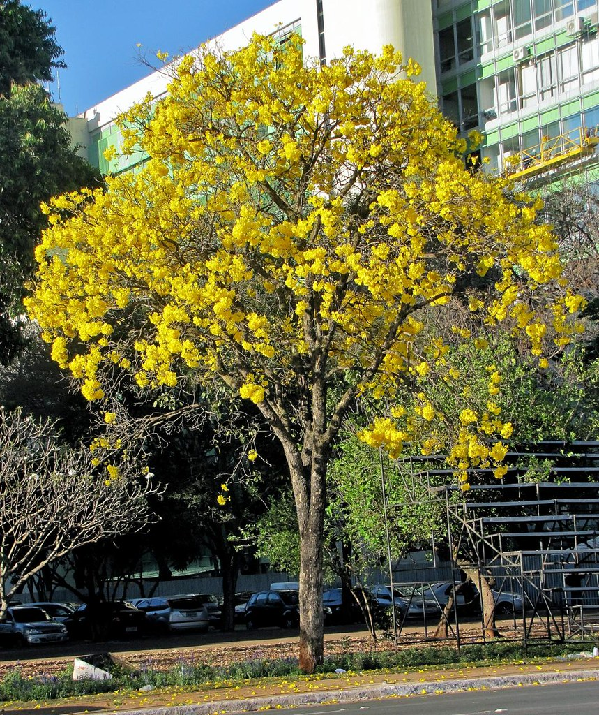 El árbol de Violetta. - Página 4 6803714764_8406c6ab82_b