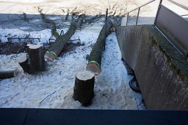 Tree Felling at Plett-Zentrum