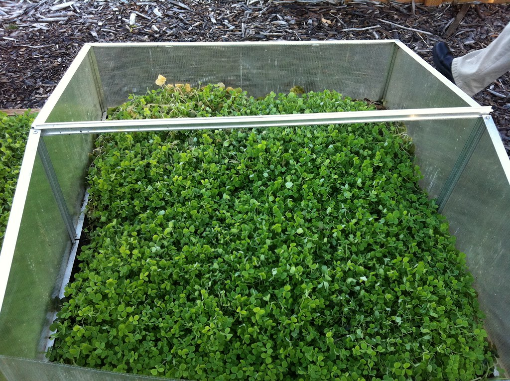 Cover Cropped Cold Frame