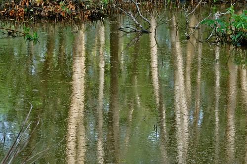trees reflection swamp johor muar westmalaysia colorphotoaward