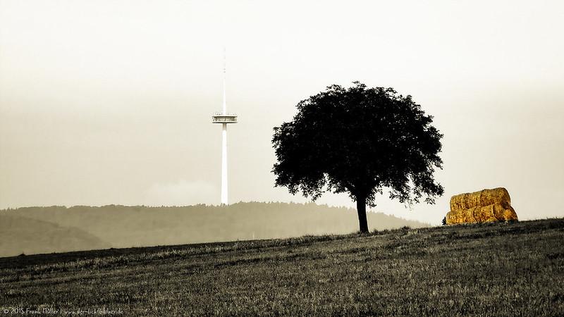 """On a field in """"Lahnstein at the height"""" (Germany)/Auf einem Feld in """"Lahnstein auf der Höhe"""""""