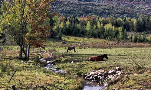 autumn trees horses green fall colors automne canon october quebec outdoor couleurs vert arbres québec octobre estrie chevaux 2015 ruisseau cantonsdelest