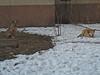 Kyjev – toulaví psi, foto: Ilona Trnková