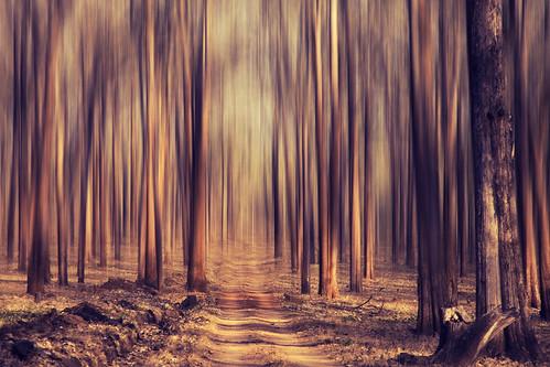 Forest dream! | by VinothChandar
