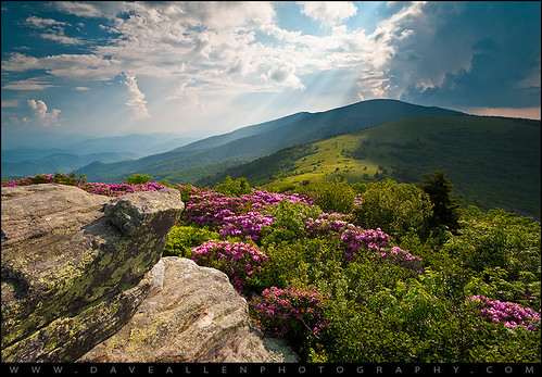 appalachian trail northcarolina wnc westernnorthcarolina roanmountain nc janebald rhododendron blooms flowers janesbald summer spring nature natural nikon d700 daveallen tn grassybald southernappalachians beauty naturalbeauty blueridgemountains roan highlands mountains rays beams lightrays sunbeams light crepuscular mountain wideangle blueridge carolina outdoors adventure wilderness hiking mygearandmeplatinum mygearandmediamond platinumheartaward